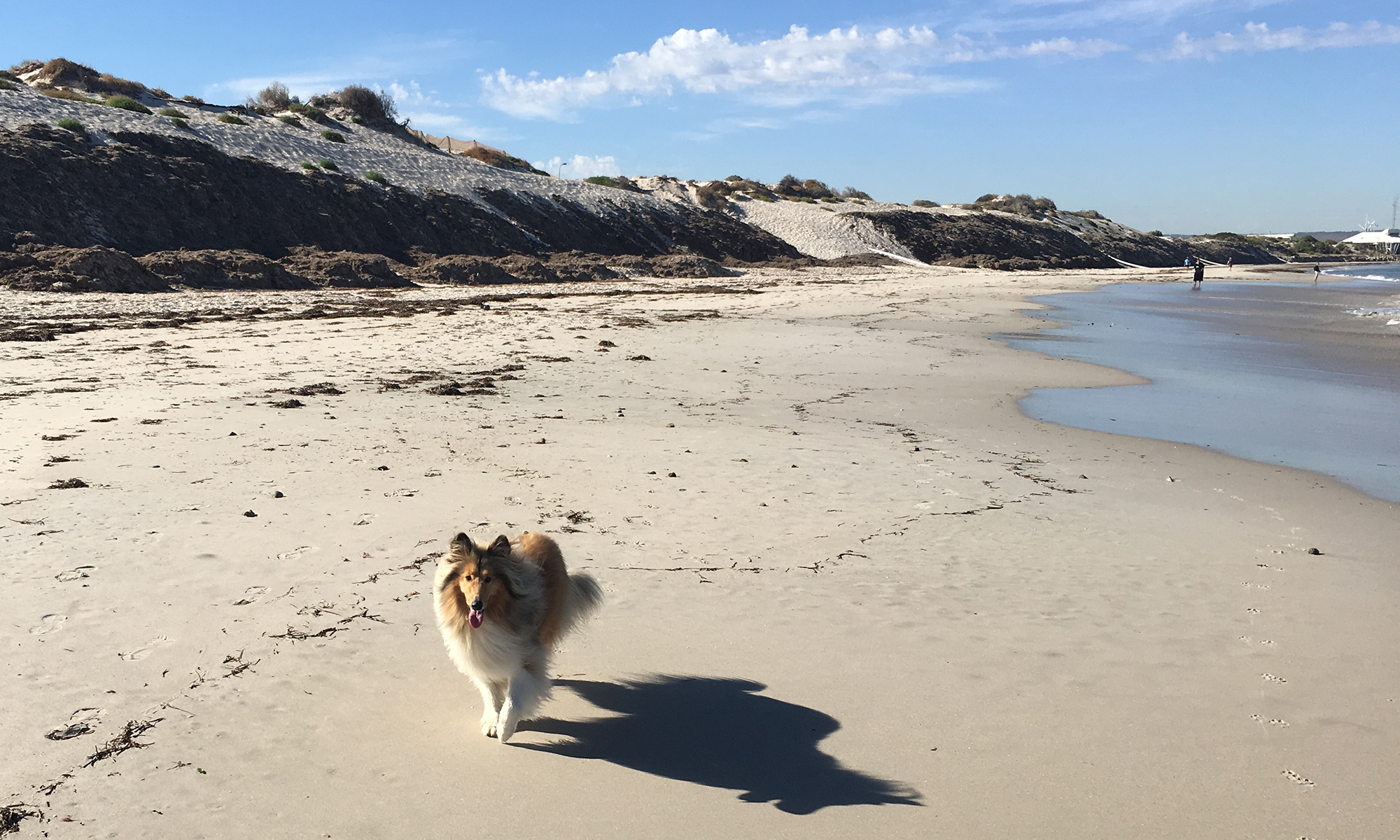 Adelaide beach holiday accommodation - our Maggie